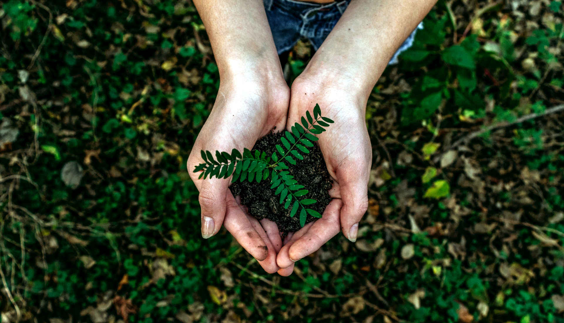Europawahl Umweltschutz: Hand mit Pflanze