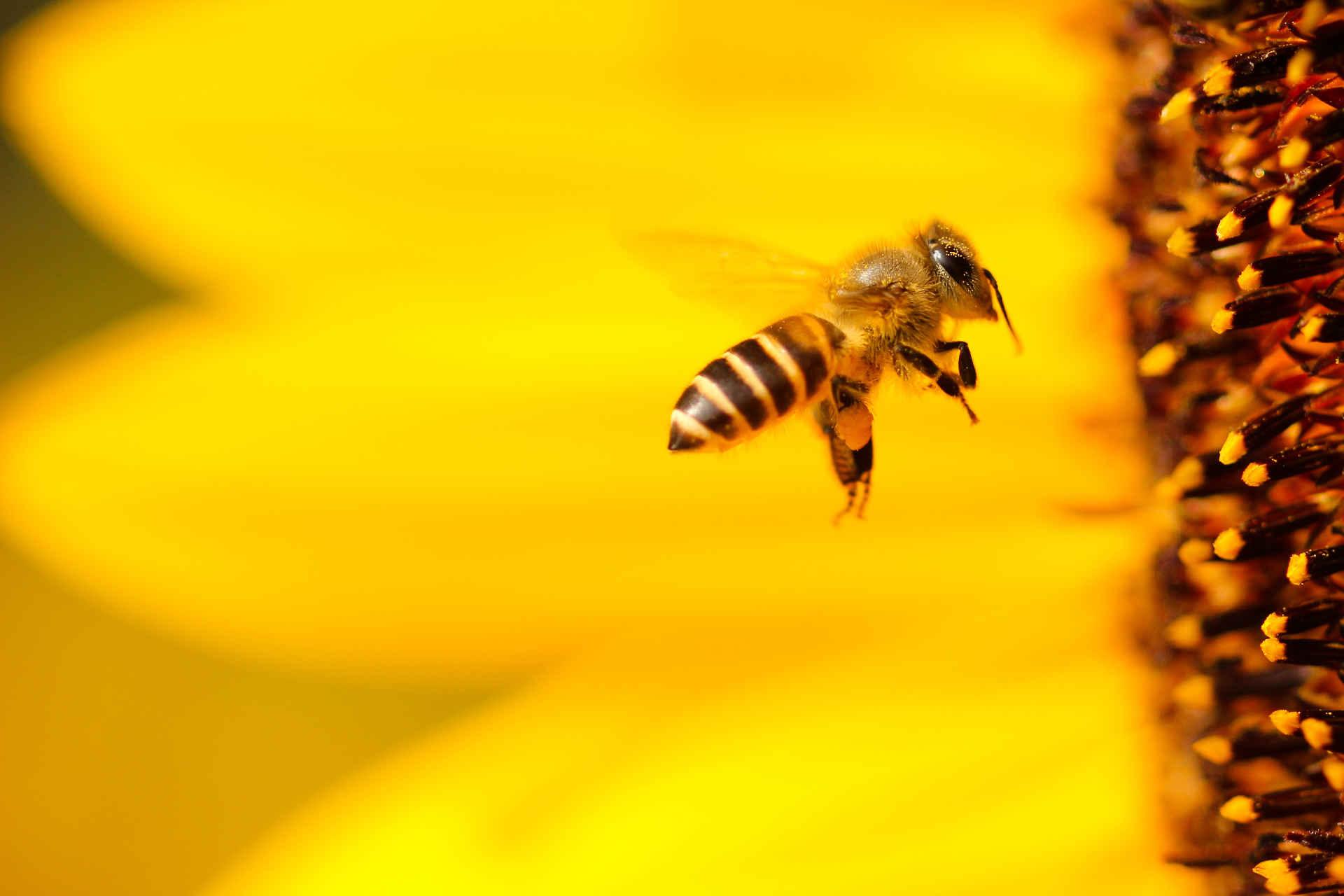Was hilft gegen Mücken? | WWF Blog