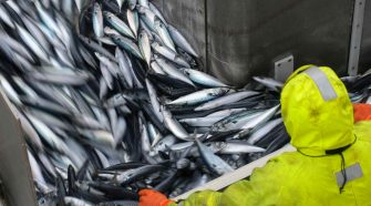 Fischfang: Trawler in Schottland