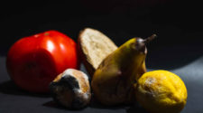 Lebensverschwendung: Rottendes Obst
