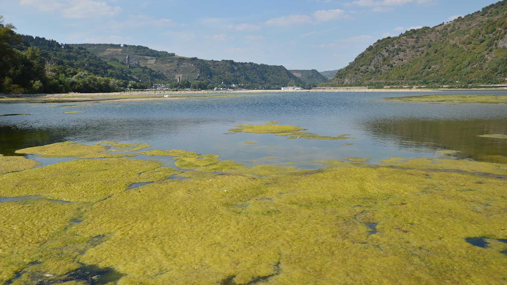 Klimakrise: Algen auf Gewässer