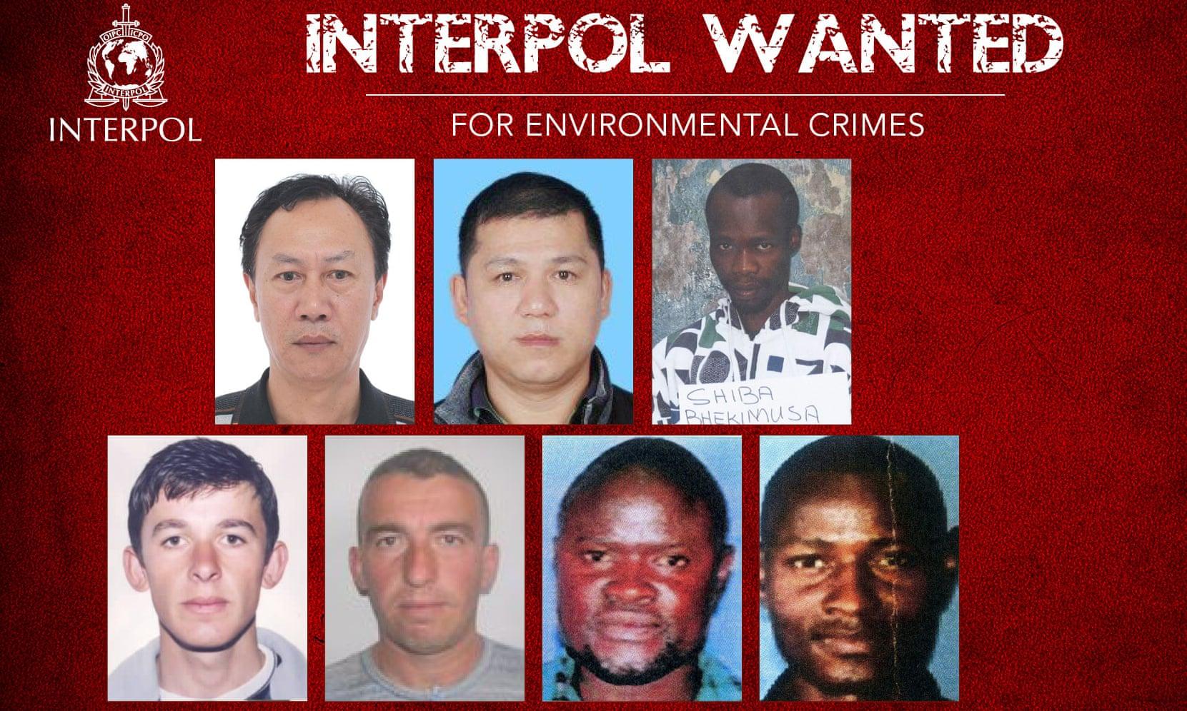 Most wanted Umweltverbrecher