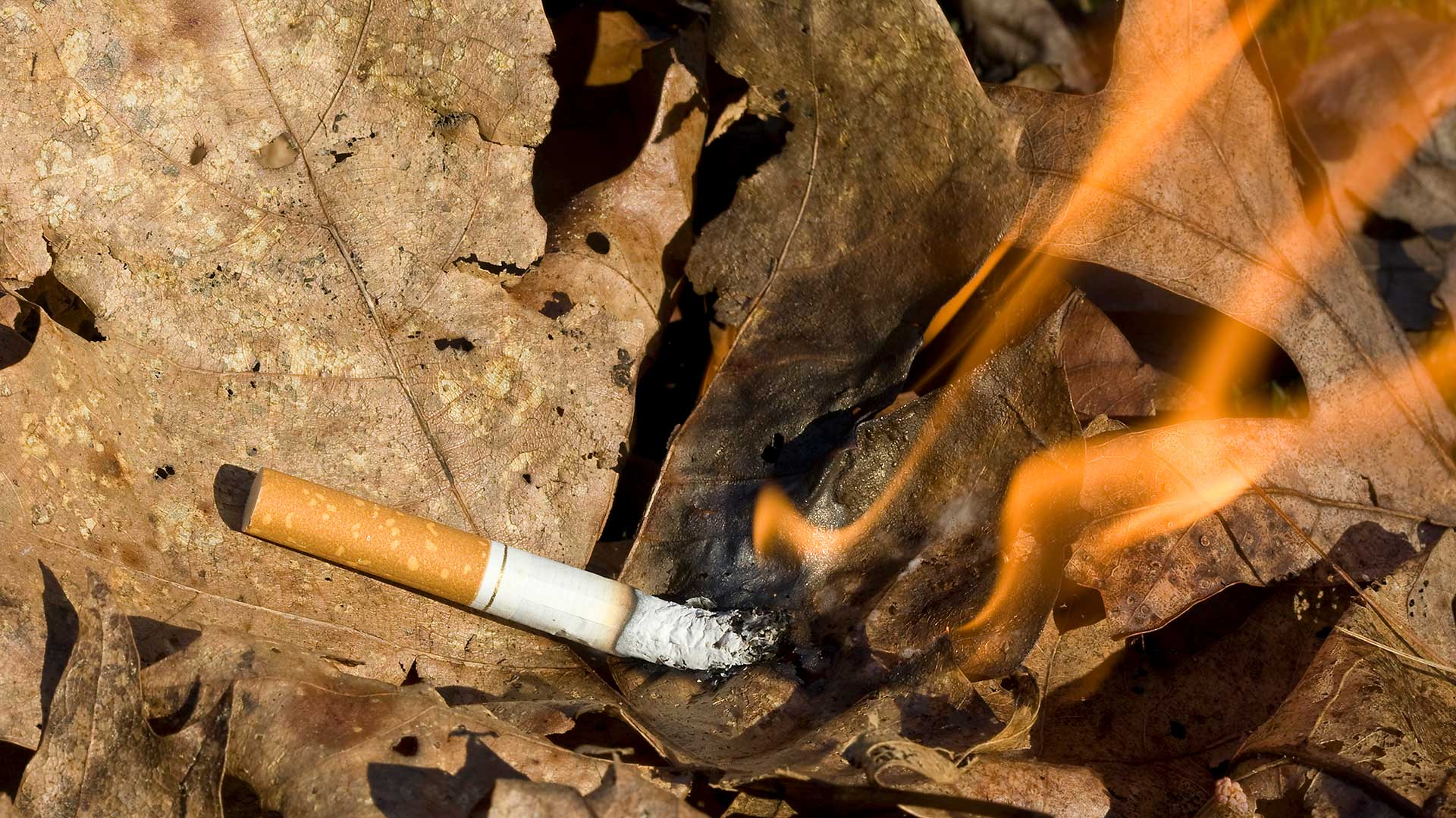 Achtlos weggeworfene Zigarettenkippen zählen zu den häufigsten Brandauslösern. © chrisroselli / iStock / Getty Images