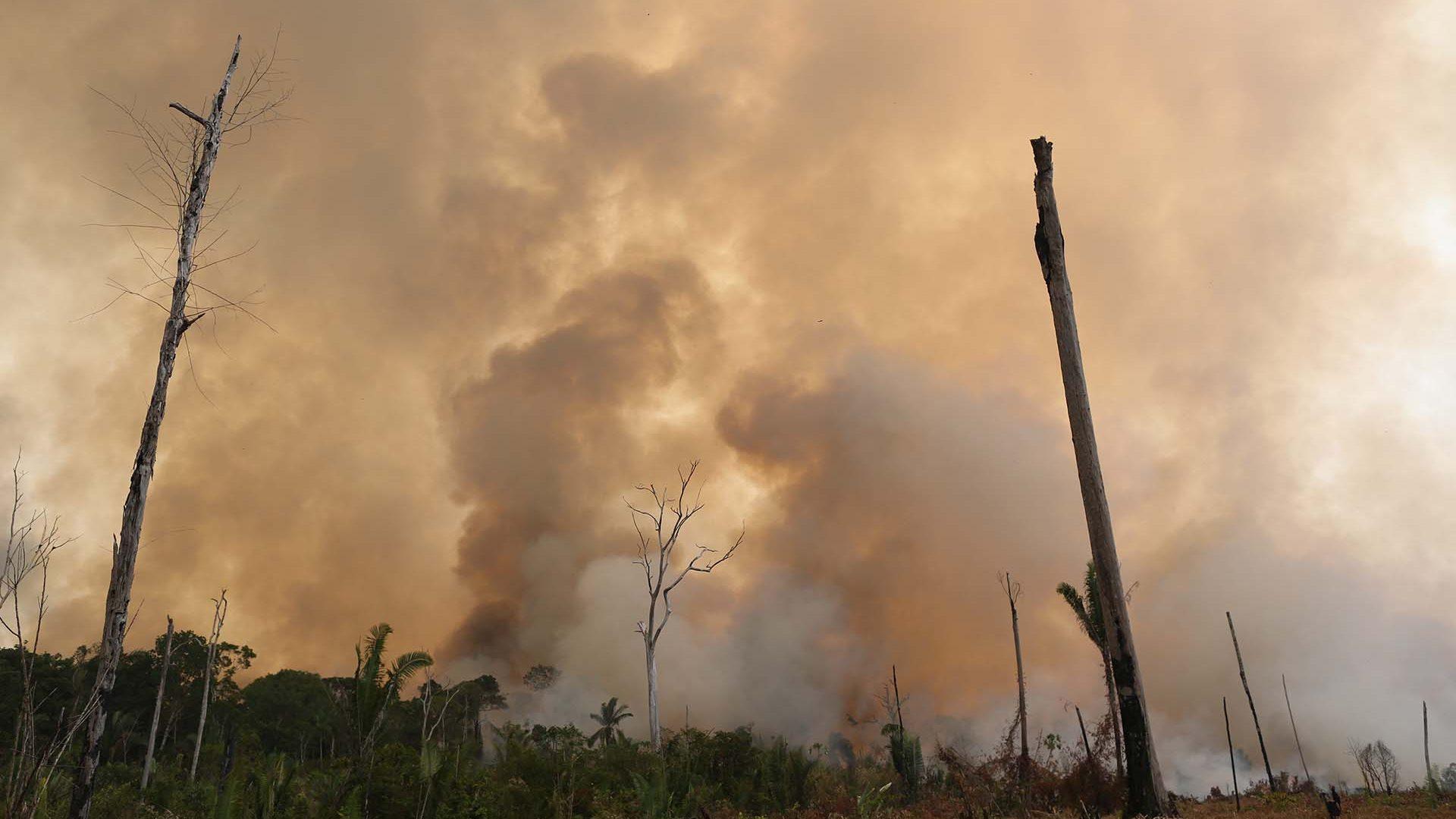 Amazonas steht in Flammen