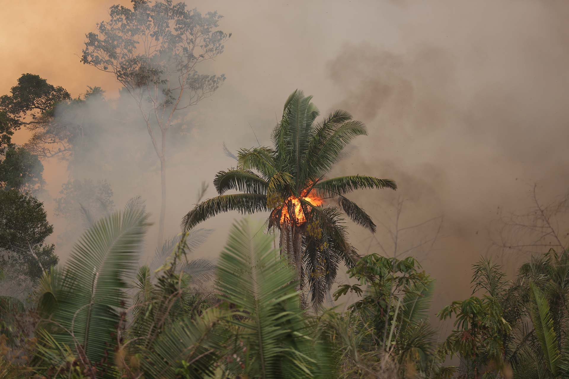 Verheerende Brände im Amazonas