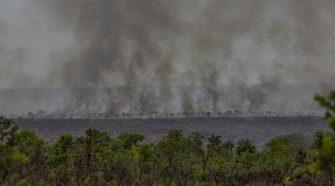 Brasilien unter Bolsonaro: Brandrodung für Soja