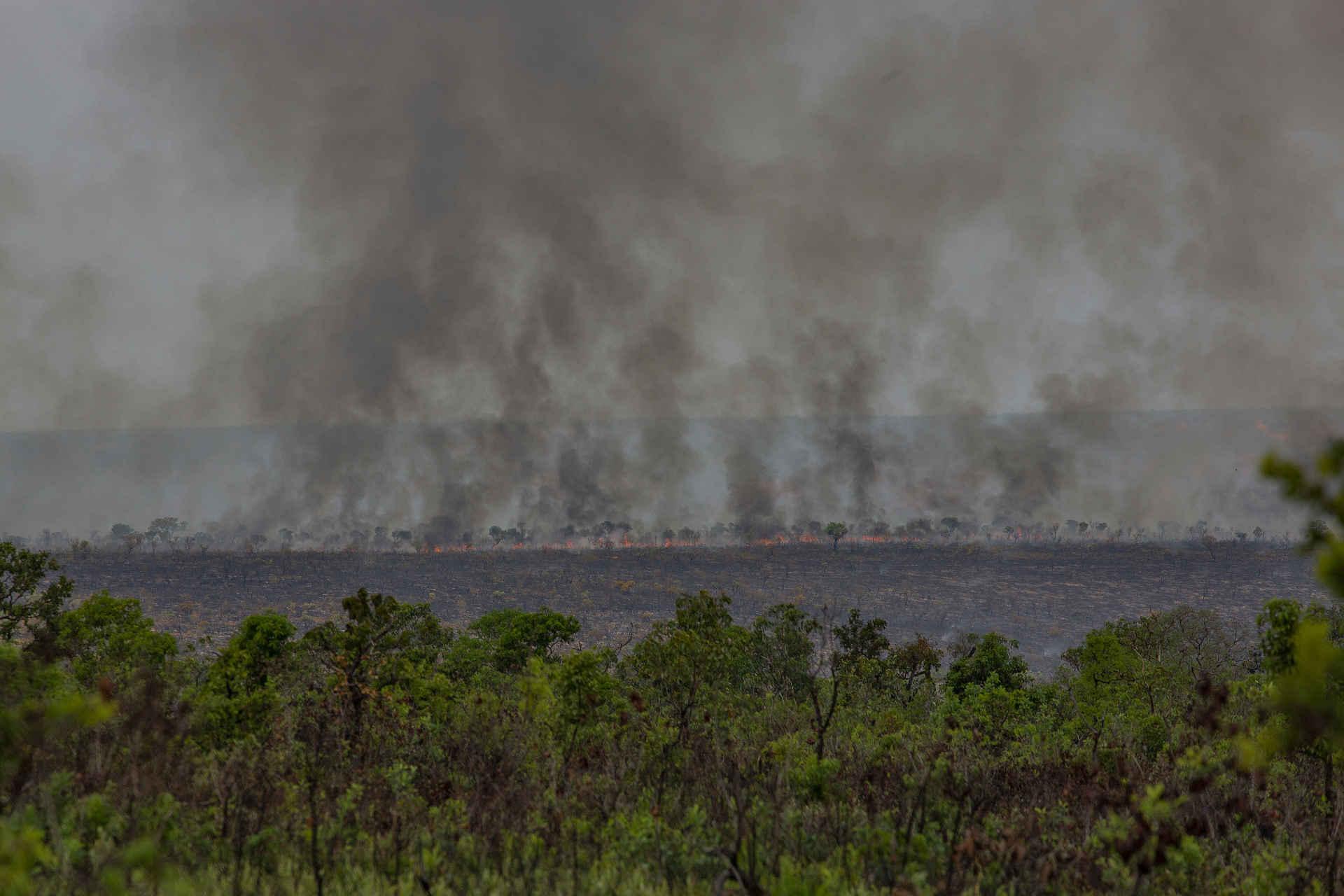 Cerrado: Brandrodung für Soja