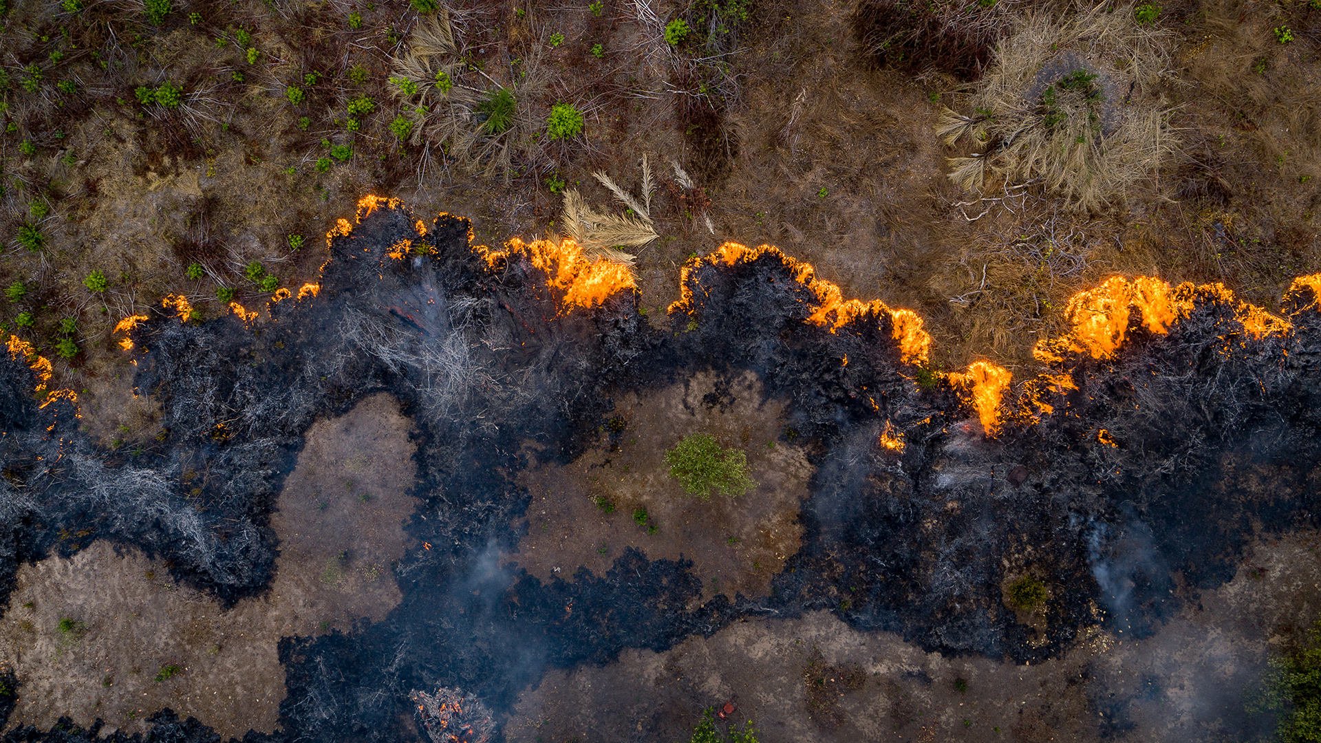 Brasilien: Mehr als 70.000 Waldbrände wurden bereits im Amazonas registriert. © Day's Edge Productions / WWF-US