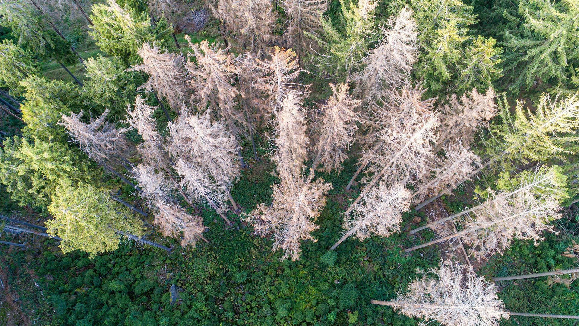Unübersehbar: Waldschaden durch die Dürre in Deutschland