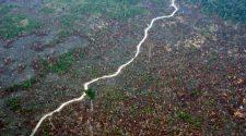 Amazonas Merkel: Entwaldung schreitet weiter voran