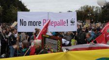 Klimastreik auf der Strasse, Verzagtheit im KLimakabinett