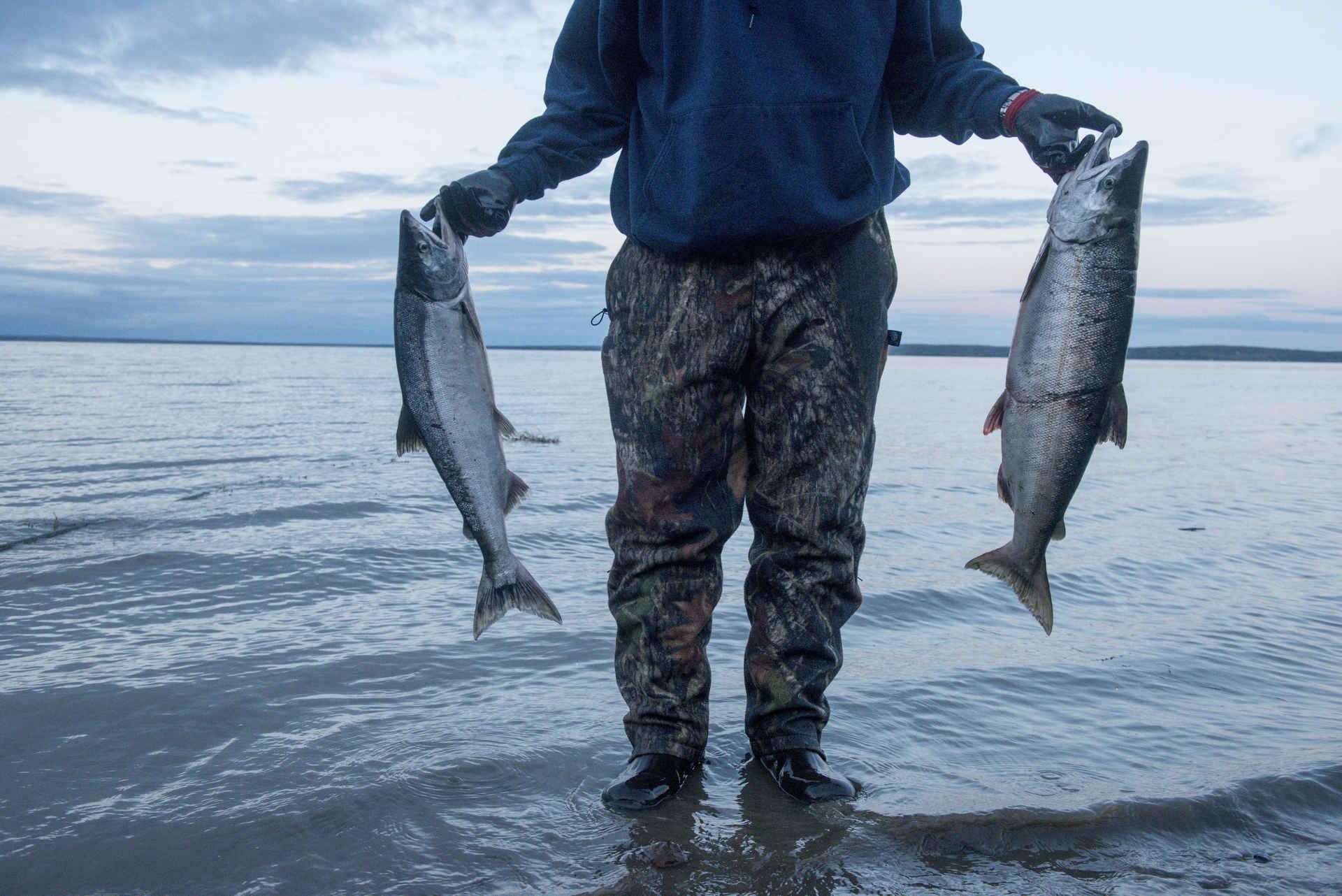 Lachs aus Alaska
