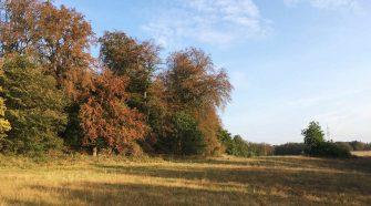 Waldsterben in Meckenburg: Braune Buchen