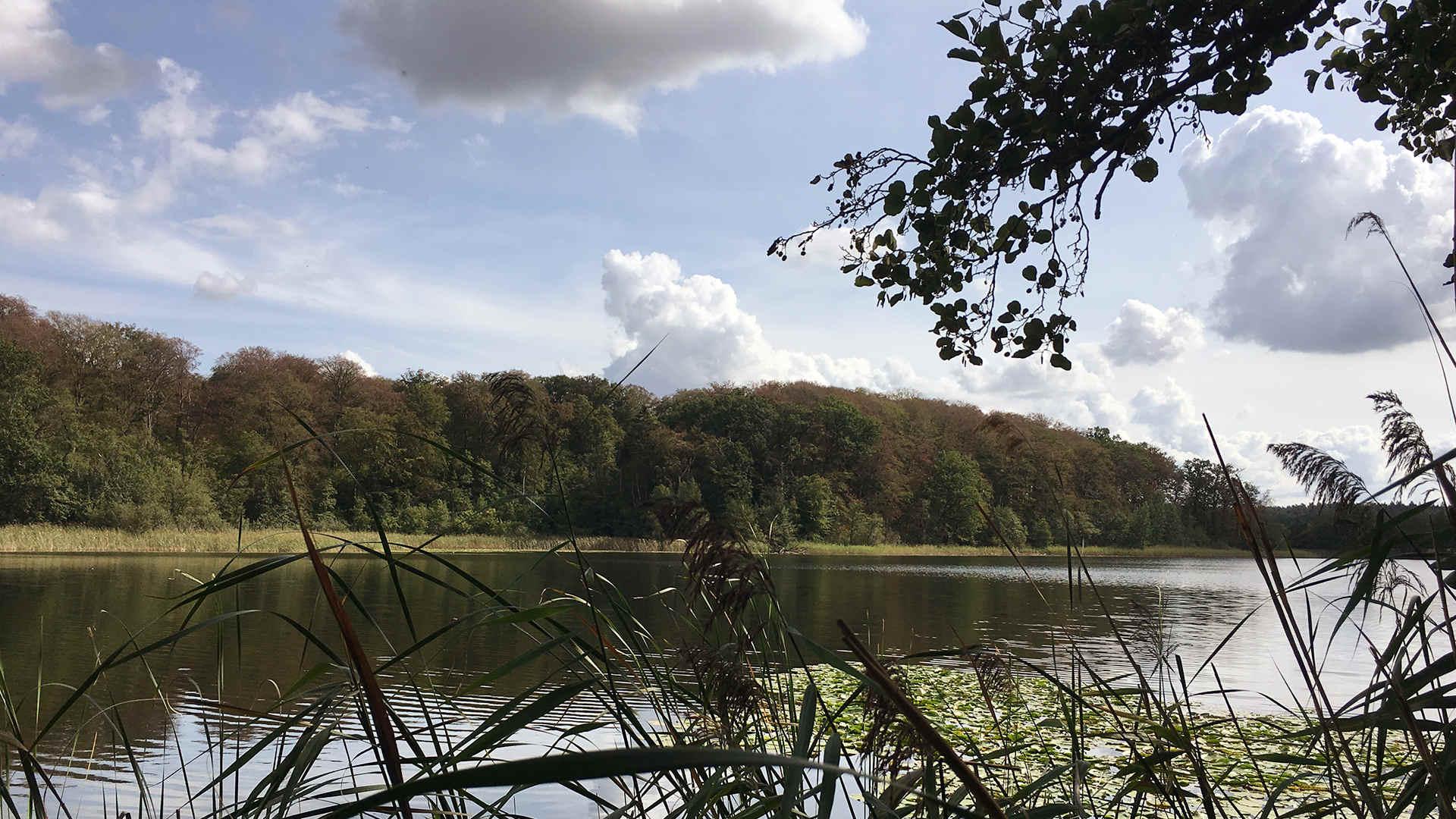 Waldsterben Mecklenburg 2019: Selbst am See sind die Buchen braun