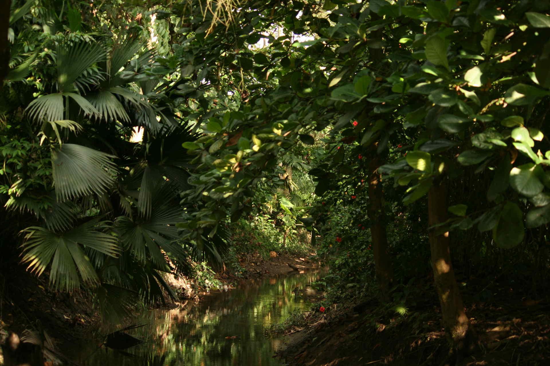 Grenze einer Bananen Plantage, in der Mitte fließt ein Bach