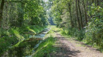 Wald braucht Wasser: Entwässerungsgraben