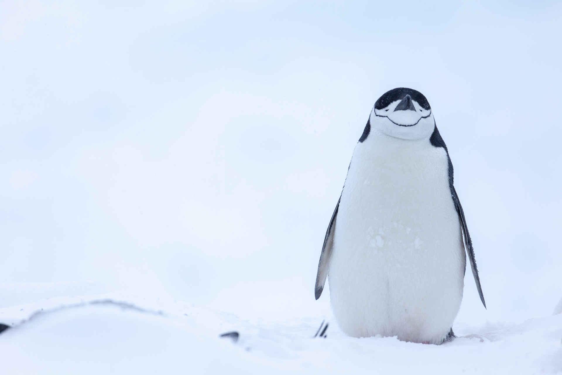 Pinguine sind beliebt - und ganz anders, als wir glauben