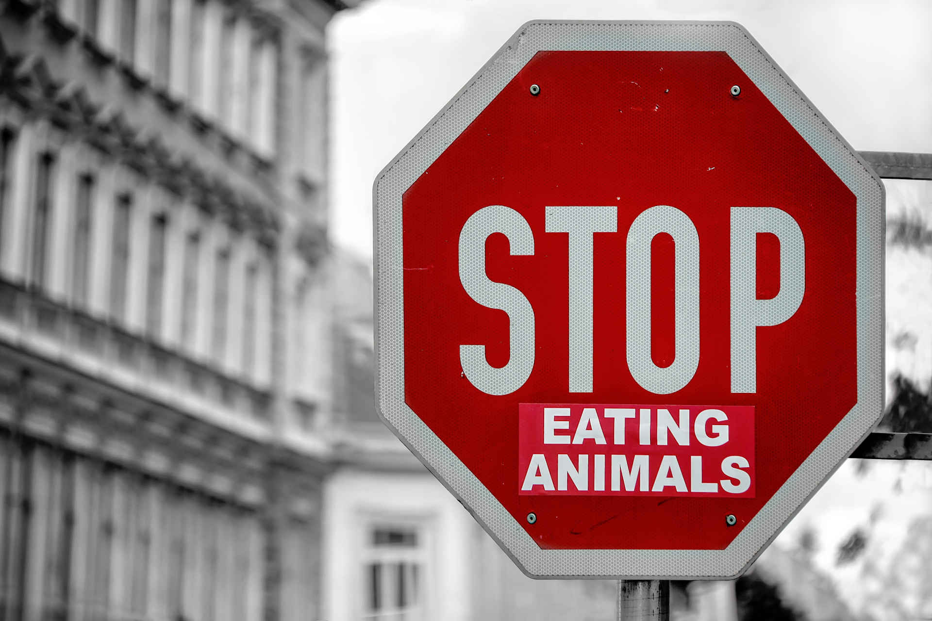 vegetarisch essen: Schild stop eating animals