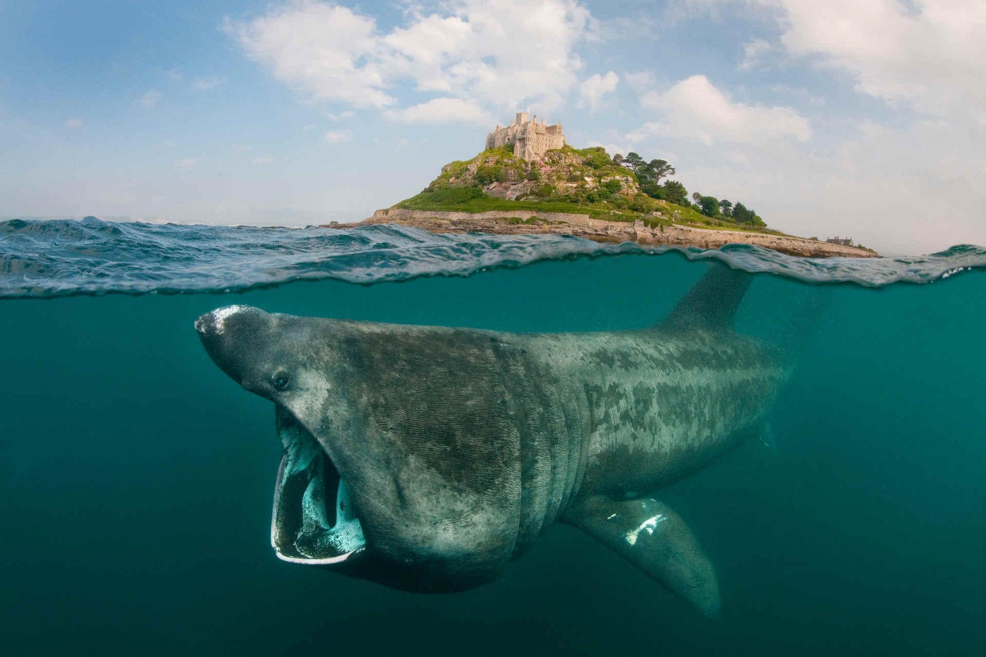 Riesen Hai vor der Küste von Cornwall