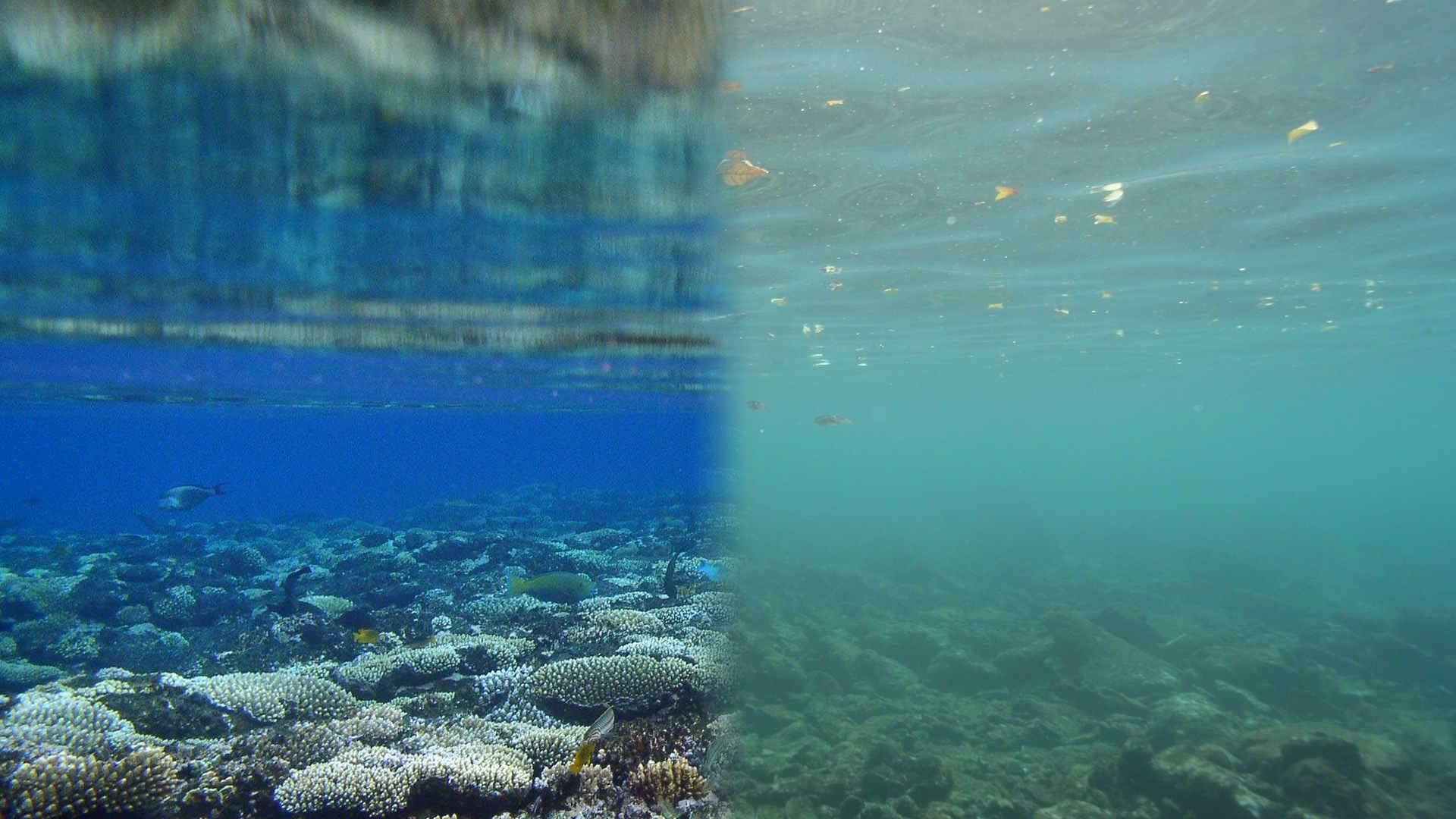 Meer und Klimakrise: Lebendiges Riff, totes Riff