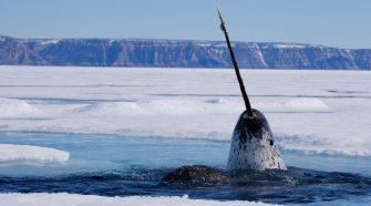Neues Arktis-Schutzgebiet Tuvaijuittuq