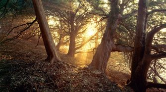 Skurrile Fakten über Bäume