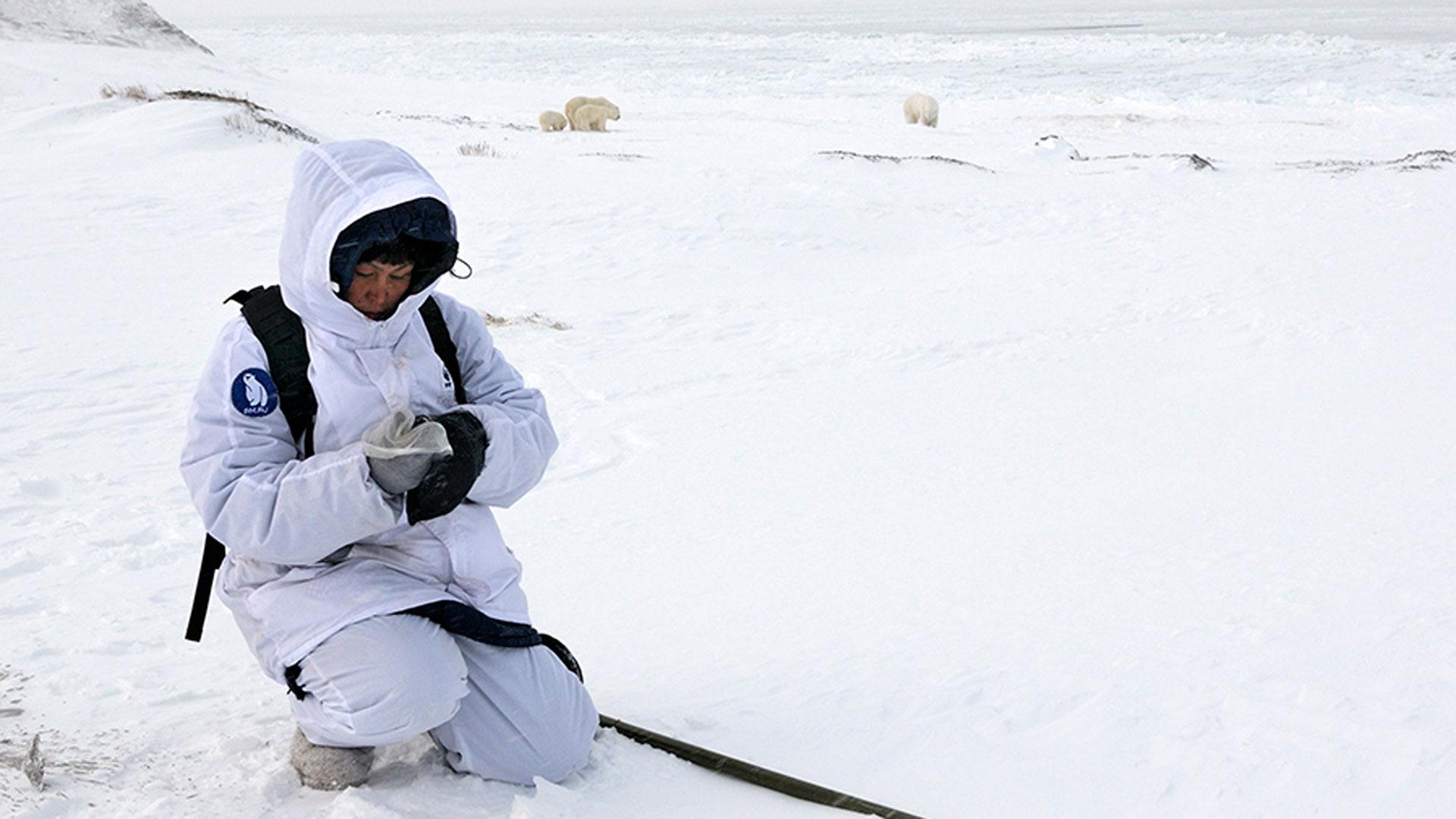 Eisbären-Invasion nahe des Dorfes Ryrkaypiy am Nordpolarmeer als Ausdruck des Klimawandels