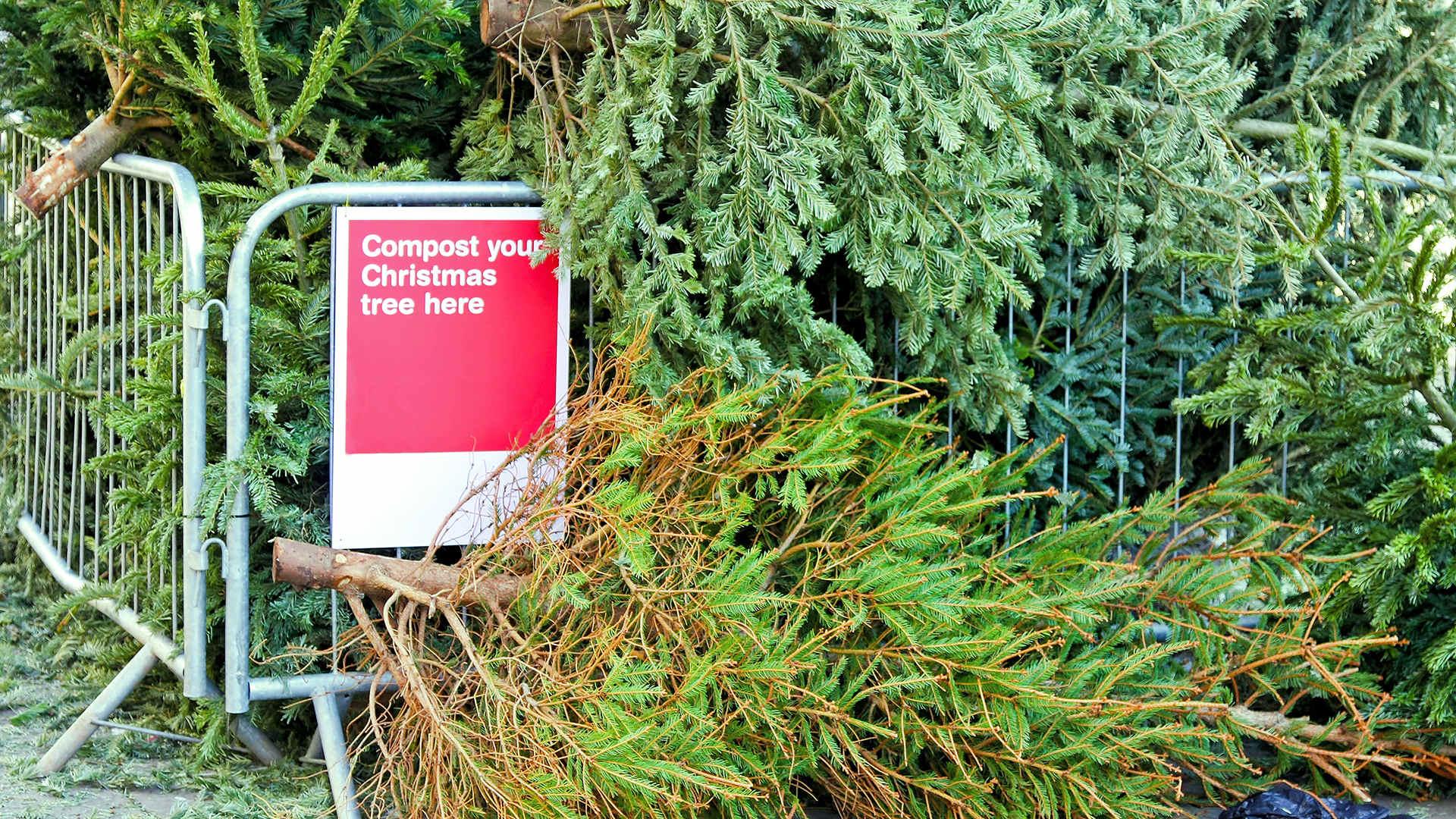 Was ist die Alternative zu diesen weggeworfenen Weihnachtsbäumen?
