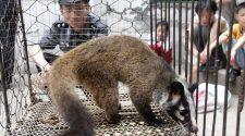 Corona-Virus: China reagiert mit einem zweitweisen Verbot des Wildtierhandels. © AFP