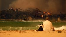 Feuer in Australien: Es gibt zahlreiche Möglichkeiten zu helfen. © Alex Coppel / Newspix