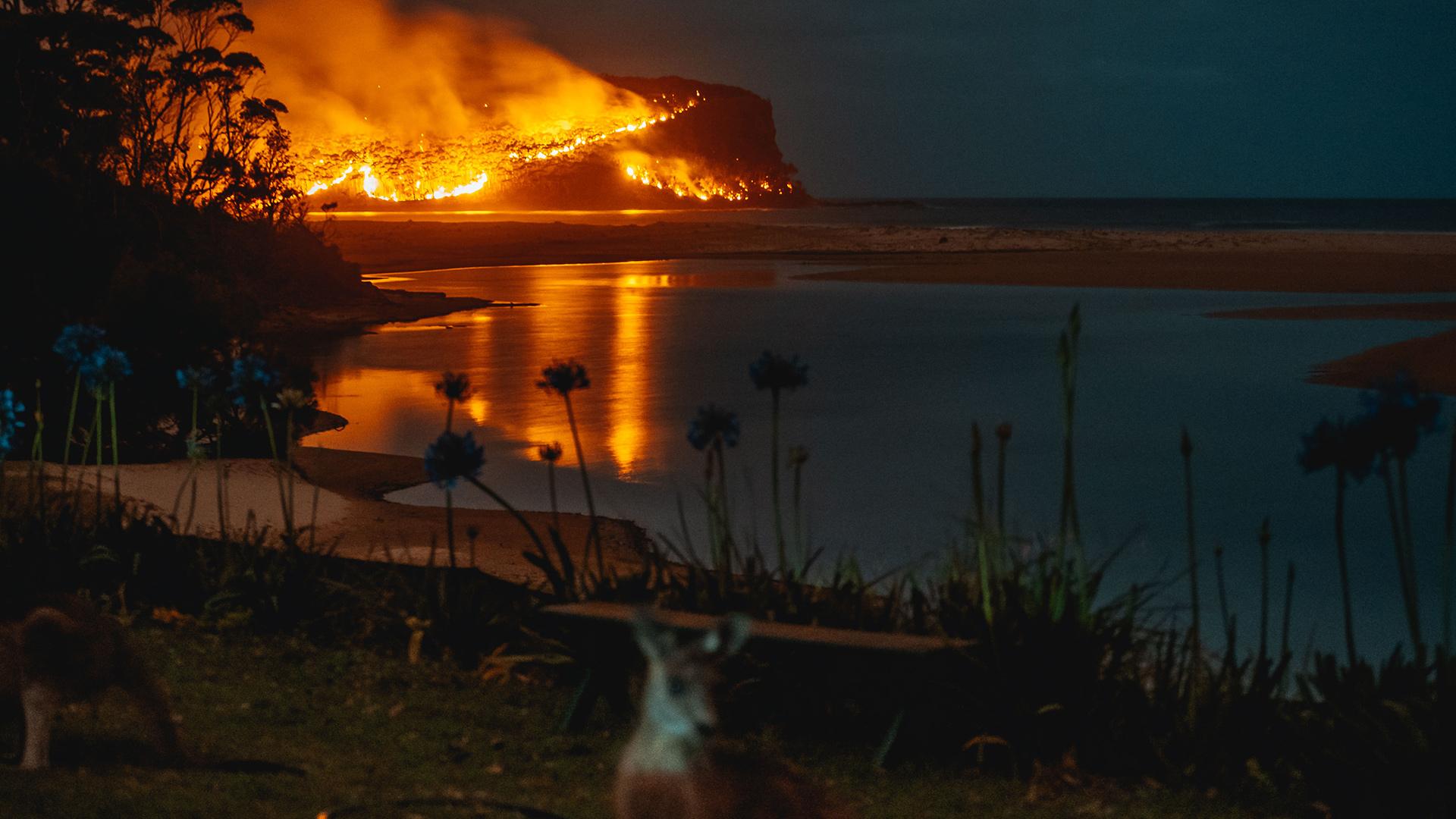Feuer in Australien: Die Menschen und Tiere brauchen dringend Hilfe. © Josh Burkinshaw