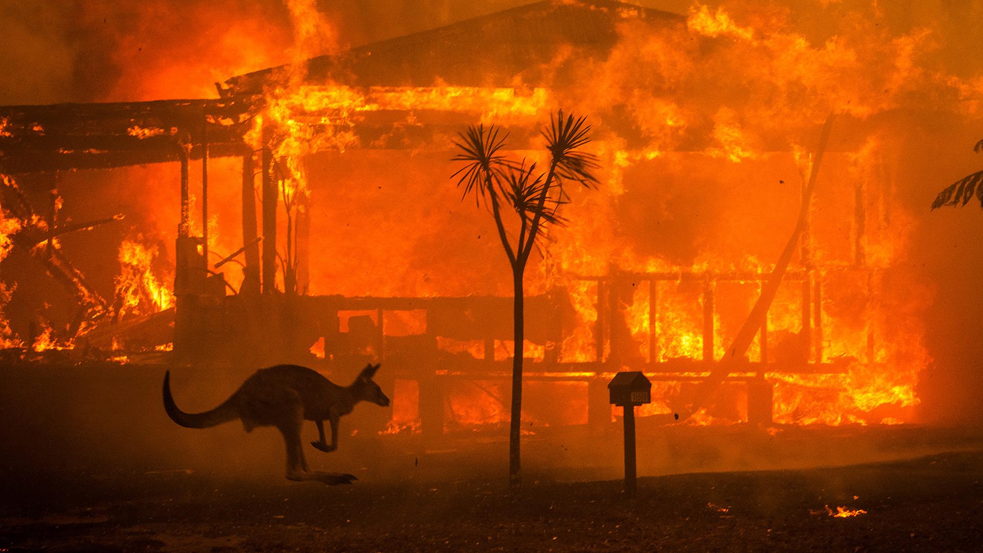 Dramatische Bilder: Die Feuer in Australien sind außer Kontrolle. © Matthew Abbott / WWF-Australia / Panos