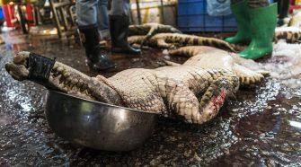 Der Handel mit Wildtieren ist vermutlich die Quelle des Coronavirus. © Aleksandar Plavevski / shutterstock