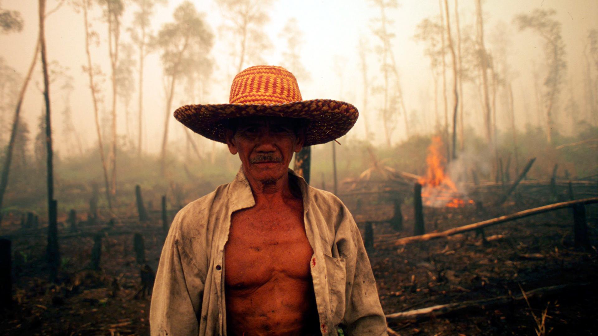 Palmöl-Check 2019: Deutsche Spitzenreiter und Schlusslichter. © Tantyo Bangun / WWF