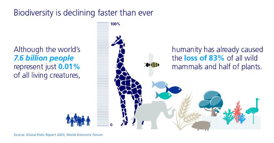 Die Menschheit hat ein Großteil der Artenvielfalt vernichtet. © Zurich Insurance Group