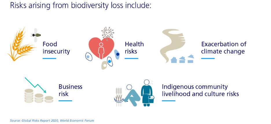 Der Artenverlust hat unmittelbare Auswirkungen auf die Menschen. © Zurich Insurance Group