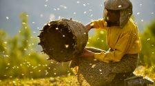"""Der Kinofilm """"Honeyland"""" könnte sogar einen Oscar gewinnen. © 2020 Cinejoy Movies GmbH"""