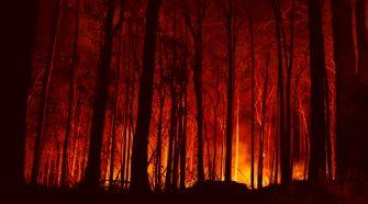 Etwa zwölf Millionen Hektar Fläche wurde bei den aktuellen Buschfeuern in Australien verbrannt. © Adam Dederer / WWF