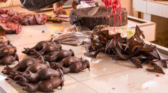 AufAuf einem Markt in Wuhan soll Covid-19 zum ersten Mal auf Menschen übergesprungen sein. © Maurizio Biso / Getty Images einem Markt in Wuhan soll Covid-19 zum ersten Mal auf Menschen übergesprungen sein. es passieren, dass humanpathogene Viren auf Menschen übersprungen. © Maurizio Biso / Getty Images