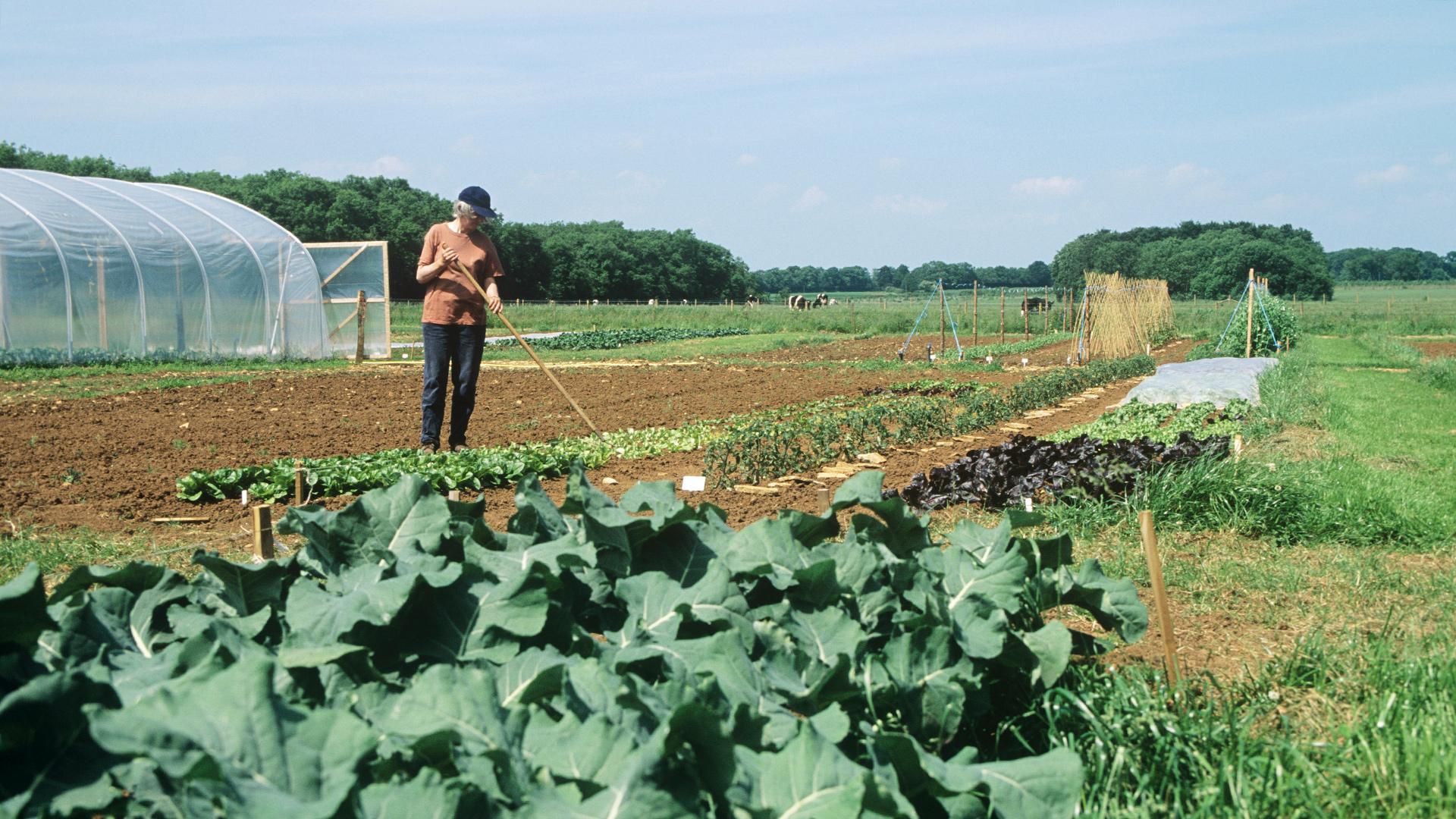 Die Landwirtschaft muss ihren Beitrag für den Klimaschutz leisten. © David Lawson / WWF