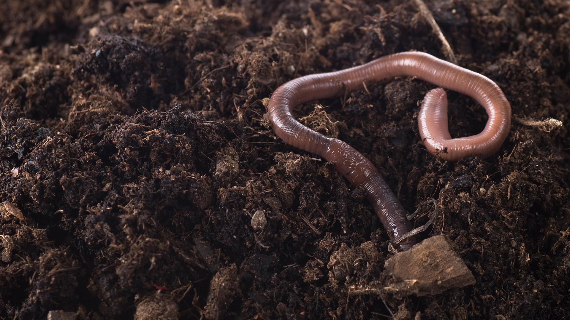Gesunde Böden speichern CO2, das aus der Luft über die Pflanzen aufgenommen wurde. Kohlenstoff. © iStock / Getty Images