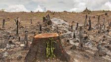 Die Corona-Krise ist eine Folge unseres menschlichen Handelns. © yotrak / thinkstock / Getty Images / WWF