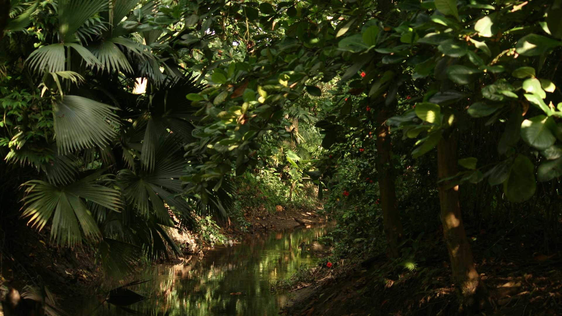 konventionellen Bananen nachhaltiger produzieren. © Denis Ünver / WWF