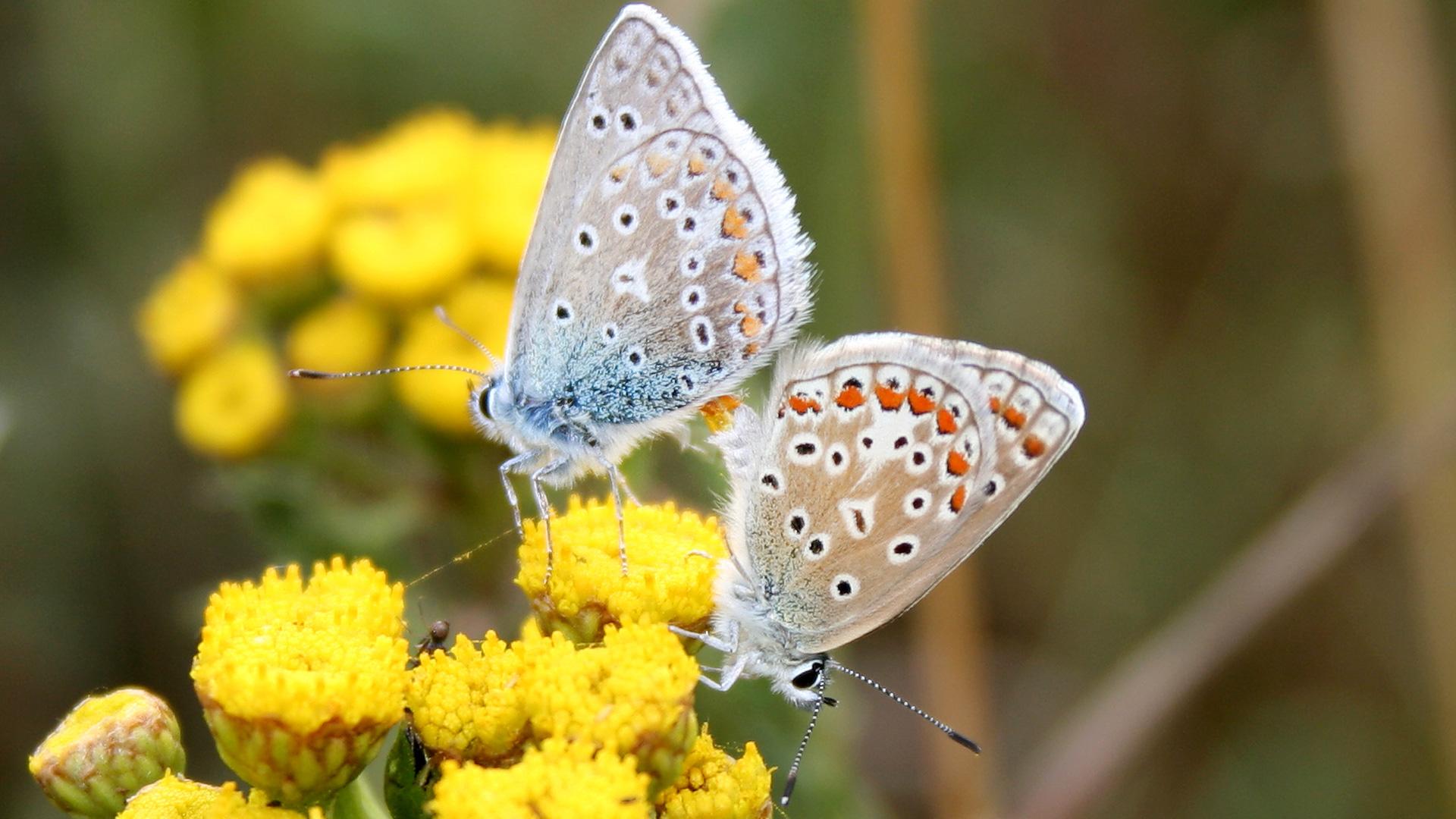 Warum verschwinden unsere Schmetterlinge und was kann jeder selbst tun?
