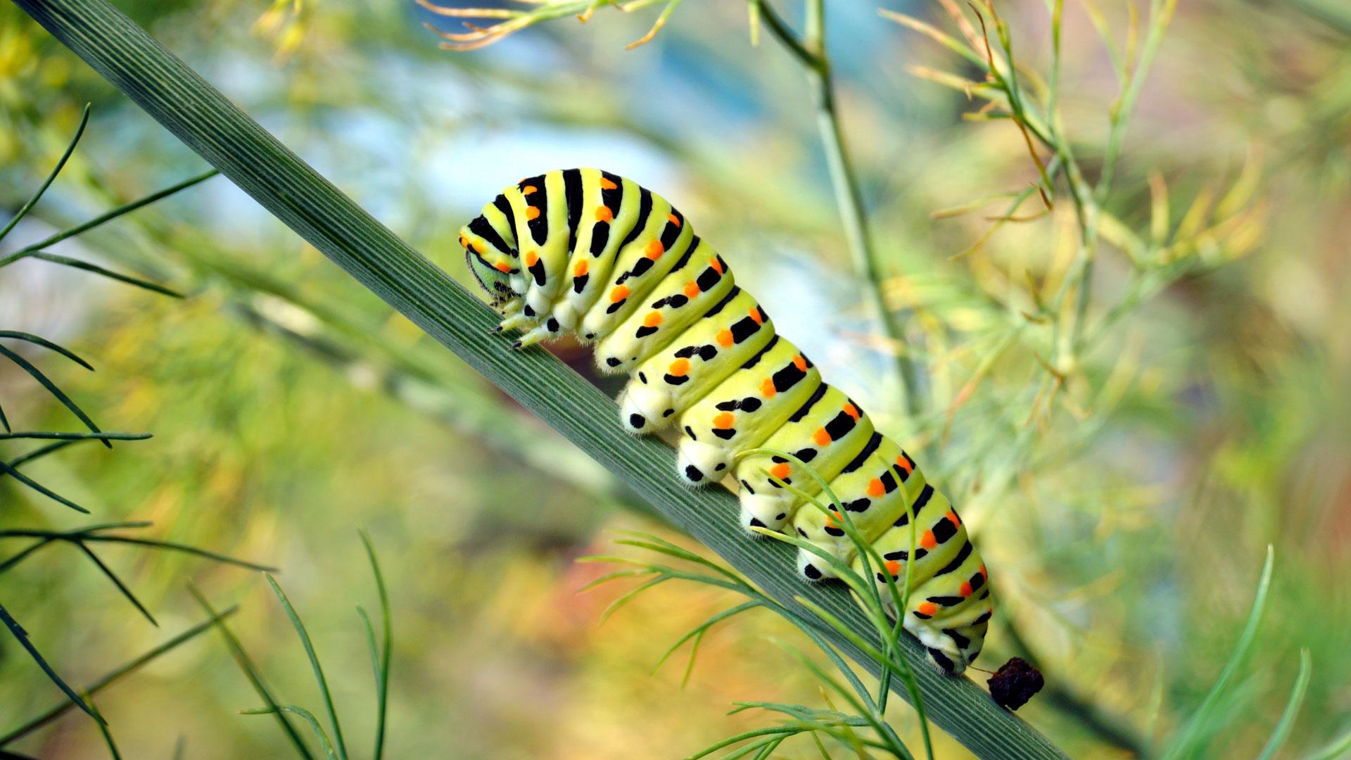 Warum sind die Schmetterlinge bedroht und wie kann ich sie füttern?
