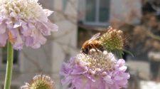 Damit mein Balkon bienenfreundliche Pflanzen bekommt, hab ich mich mit Expertentipps versorgt. © Niklas Kolorz / WWF