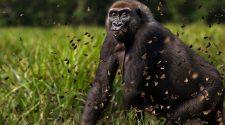 Dzanga-Sangha wird wegen des Coronavirus für alle Besucher:innen geschlossen. © Anup Shah / Naturepl / WWF