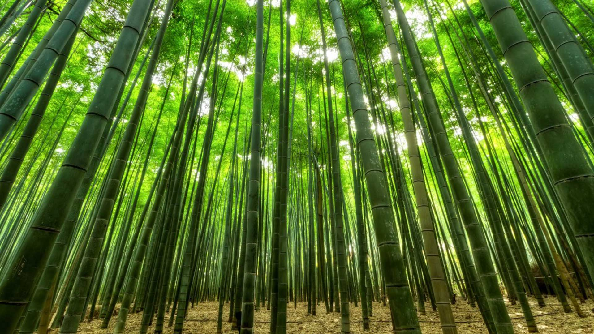 Toilettenpapier aus Bambus hat Vor- aber auch einige Nachteile. CC0 Public Domain