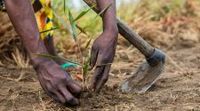 Landwirtschaft nach Corona: Frau pflanzt in Afrika