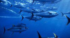 Auch für Fische hat die Klimakrise gravierende Folgen. © Doc White / WWF